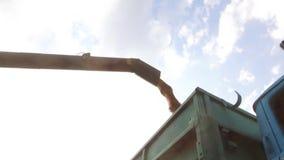 卸载建筑学五谷的联合收割机入无盖货车 联合收割机五谷 免版税图库摄影