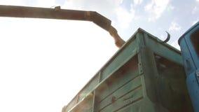 卸载建筑学五谷的联合收割机入无盖货车 联合收割机五谷 库存照片