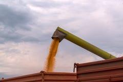 卸载被收获的玉米的联合收割机木钻入拖拉机tr 免版税库存图片