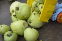 卸货的果子 免版税库存照片