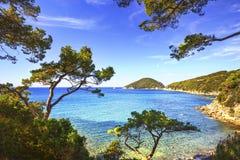厄尔巴岛海岛海,费拉约港Viticcio海滩海岸和树 Tu 免版税库存照片