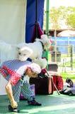 厄梅尔(啤酒舍瓦),以色列白的长卷毛狗跳过小丑的后面的夏天区域的, 2015年7月25日 图库摄影