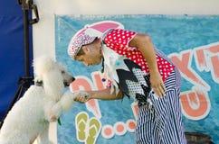 厄梅尔(啤酒舍瓦),以色列-,盖帽的小丑震动在阶段的爪子白色长卷毛狗- 2015年7月25日 免版税库存图片