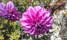 从厄瓜多尔的紫色异乎寻常的花 免版税库存图片