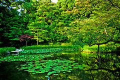 Heian宫殿的京都禅宗日本壮观的庭院 库存图片