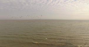 历史堡垒的惊人的空中图片在河出海口附近的 股票视频