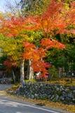 历史的村庄在autumn Shirakawa-Hachiman寺庙白川町去 库存图片