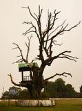 历史的树 免版税库存图片