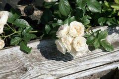 历史的白色和桃红色玫瑰色花束冷甜点 免版税库存图片