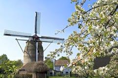 历史的风车Gronsveld和开花树 免版税库存图片