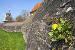 历史的洪水防御和开花的蒲公英,哈瑟尔特 库存照片