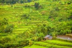 巴厘岛印度尼西亚拍摄了米大阳台 免版税库存图片