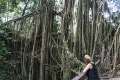 巴厘岛印度尼西亚Ubud猴子森林寺庙藤本植物 免版税库存照片
