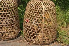 巴厘岛好斗的公鸡02 免版税库存图片