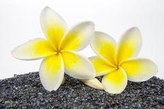 巴厘岛开花杏仁奶油饼夏威夷例证印度尼西亚lanka项链羽毛shri热带向量 免版税库存图片