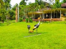巴厘岛的印度尼西亚鸟公园 库存照片