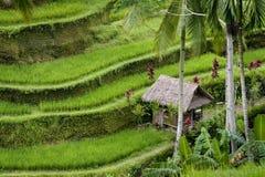 巴厘岛米大阳台 库存照片