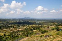 巴厘岛米大阳台 图库摄影