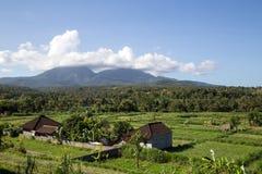 巴厘岛米大阳台 库存图片