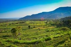 巴厘岛领域和小山 免版税库存照片