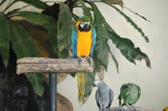 巴厘岛鸟分行印度尼西亚公园鹦鹉 免版税库存图片