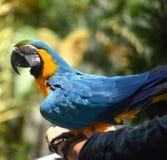 巴厘岛鸟分行印度尼西亚公园鹦鹉 免版税库存照片