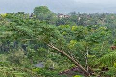巴厘岛,印度尼西亚热带自然风景  在巴厘岛北部 库存图片