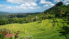 巴厘岛,印度尼西亚的稻田 免版税库存照片