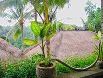 巴厘岛,印度尼西亚- 2012年4月13日:平房看法Nandini密林手段和温泉的 库存照片