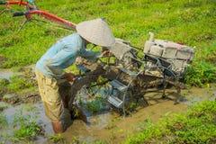 巴厘岛,印度尼西亚- 2017年4月05日:cleanning区域的农夫种植一些米种子在大阳台的一个河滩地, Ubud 免版税库存图片