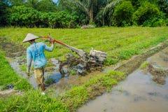 巴厘岛,印度尼西亚- 2017年4月05日:cleanning区域的农夫种植一些米种子在大阳台的一个河滩地, Ubud 库存照片