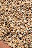 巴厘岛:未加工的咖啡豆 库存照片