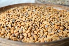 巴厘岛:未加工的咖啡豆 免版税库存图片