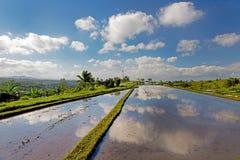巴厘岛jati luwih米大阳台 免版税图库摄影