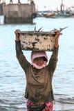 巴厘语运载在水池的鱼 库存照片
