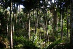 厚实森林的雨 免版税库存照片