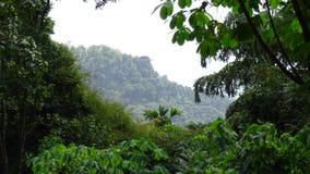 厚实的森林地区在Ambuluwawa斯里兰卡中部 库存图片