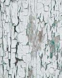 厚实的白色削皮崩裂了与在底下绿色的油漆 库存图片