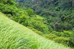 厚实的绿色热带密林背景  免版税图库摄影