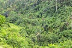 厚实的绿色热带密林背景 免版税库存照片