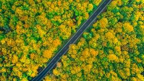 厚实的金黄色的森林由一条对角柏油路横渡了 免版税库存图片