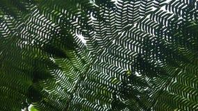 厚实,豪华,绿色植物 免版税库存照片