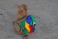 厚颜无耻的猴子 免版税图库摄影