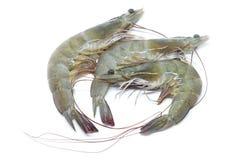 原始新鲜的大虾 免版税图库摄影