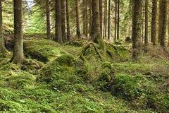 原始森林- HDR 免版税图库摄影