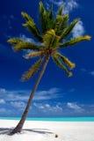 原始热带海滩 库存照片