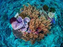 原始热带珊瑚礁 图库摄影