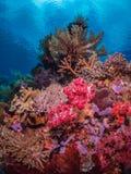 原始热带珊瑚礁 库存照片