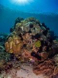 原始热带珊瑚礁 库存图片