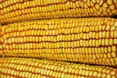 原始玉米棒的玉米 免版税图库摄影